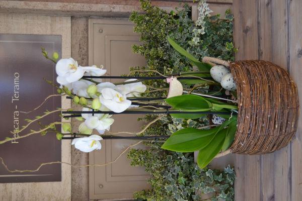 Immagine di Orchidea in cesto di vimini