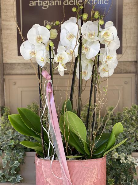 Immagine di Orchidea grande con vaso in ceramica