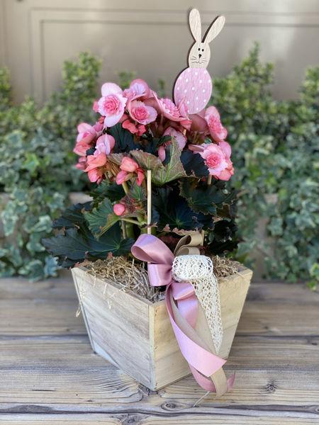 Immagine di Piantina Rosa in vaso di legno